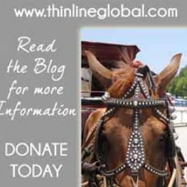Help ThinLine help the working horses of Havana with 100% of donations going to the cause