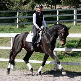 Dark Silk - 2011 Hanoverian Gelding offered by Ultimate Dressage Imports