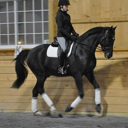 Alexa Derr partners with Versace N, donated to her by Everglades Dressage through Dressage4Kids (Photos courtesy of Alexa Derr)