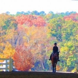 A view of the beautiful fall foliage from the covered arena at the Georgia International Horse Park.