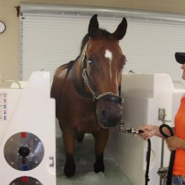 The Cold Water Leg Spa at The Sanctuary Equine Sports Therapy & Rehabilitation Center helps horses with tendon injuries during the recovery process (Photo: courtesy of Brenda McDuffee)