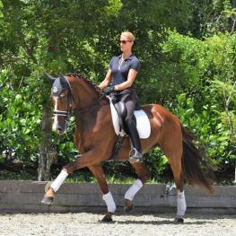 baroncelli extended trot