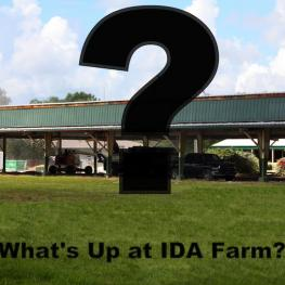 Find out what's goin on at IDA Farm at the August Shop Talk where IDA's new owners will discuss their plans for the future.