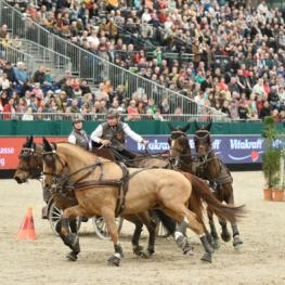 The Netherlands' Koos de Ronde and his four-in-hand on their way to victory in the last FEI World Cup™ Driving qualifier of the 2014/15 season (Karl Heinz Frieler/FEI).