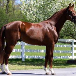 MW Feinermark (2010 Licensed Premium GOV Stallion by Fidertanz)