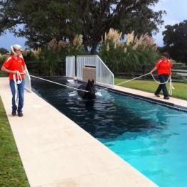 The Sanctuary's Equine Swimming Pool
