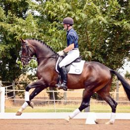 Catalouge #1 - Desario 2011 Oldenburg Gelding (De Champ / Rosario / Royal Dance)