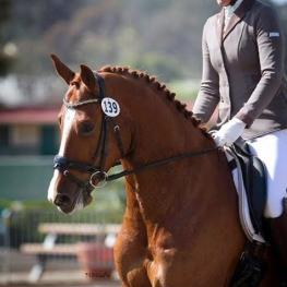 SkyHit HW and Anne Buchanan: USDF Final Awards Standings - First Level, 1st place