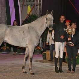 The stallion Tahar du Barthas ridden by Vincent Gaudriot (FRA) stole the show winning the Best Condition Prize at the FEI World Endurance Champioships for Young Horses. (Photo: Gilly Wheeler/FEI)