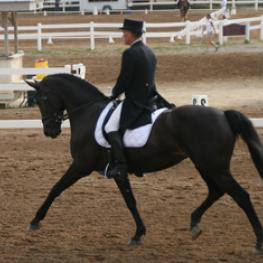 Ocita and Thorsten Kramer in the Prix St. Georges in Lexington, Kentucky