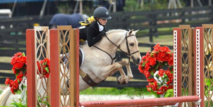 The Ocala Winter Classic was host to the $1,500 USHJA International Pony Hunter Derby. The junior rider to boast top honors was Lauren Studstill. Studstill guided ROLLINGWOODS LEMONY STICKET to score an 80 in the first round and an 85 in the second round, winning the class with a combined total of 165.