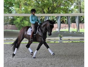 Athletic and expressive moving horse